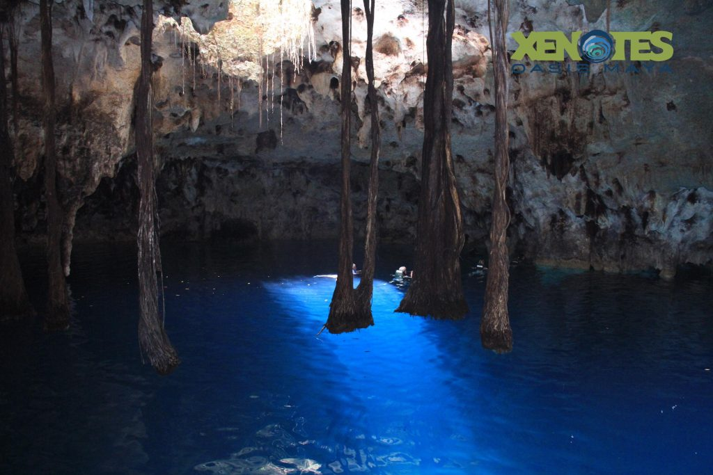 xenotes cenote tierra cave