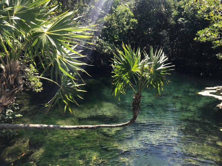 Xel-Ha Cenotes
